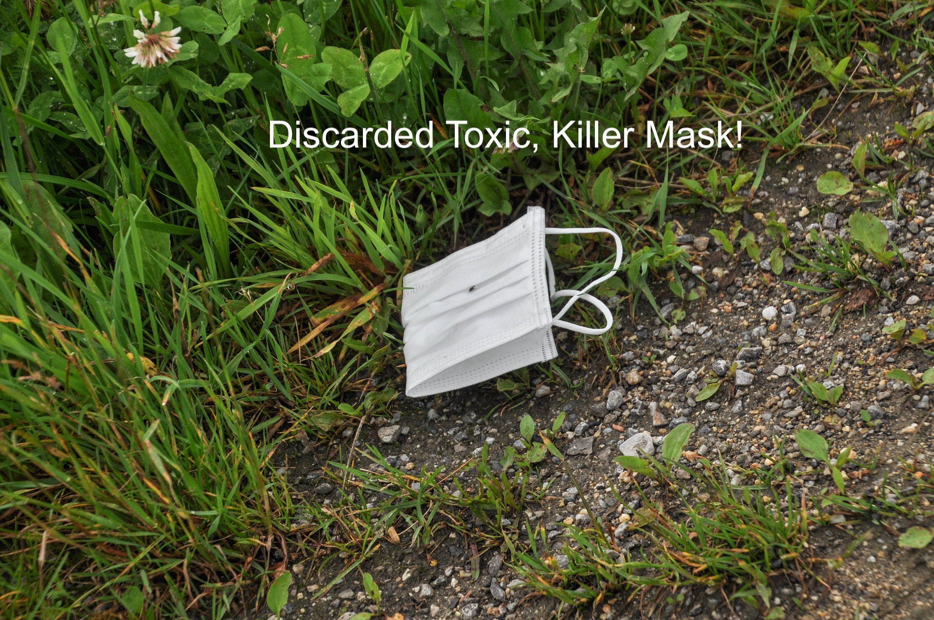 MASKHOLES ARE LITTERBUGS THROWING THEIR BIOHAZARD WASTE ON THE GROUND!