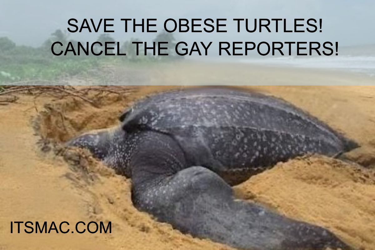 OBESE FLAILING TURTLE VS AGING QUEER FAGOT!
